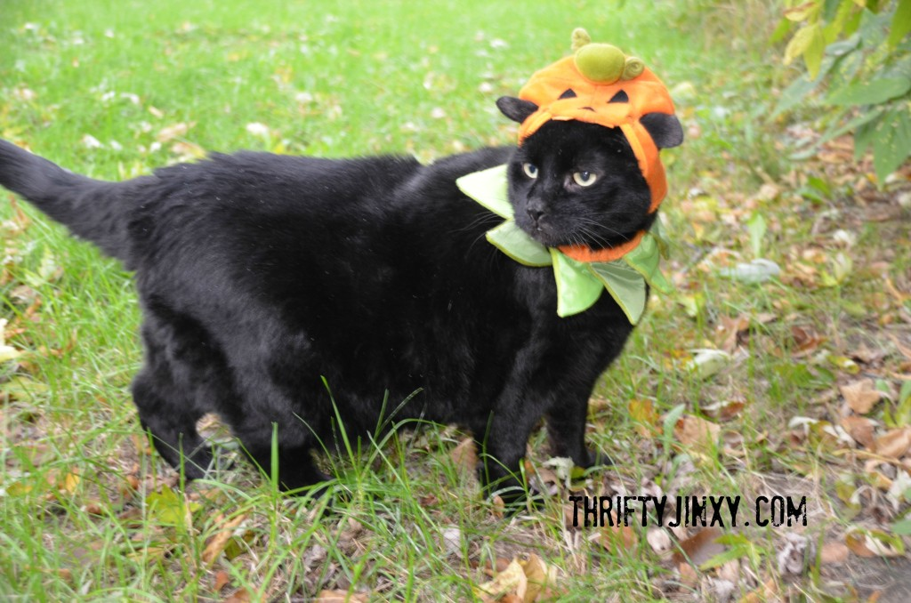 Jinxy Pumpkin #shop #ShebaCat #cbias