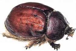 11.3.13 beetle