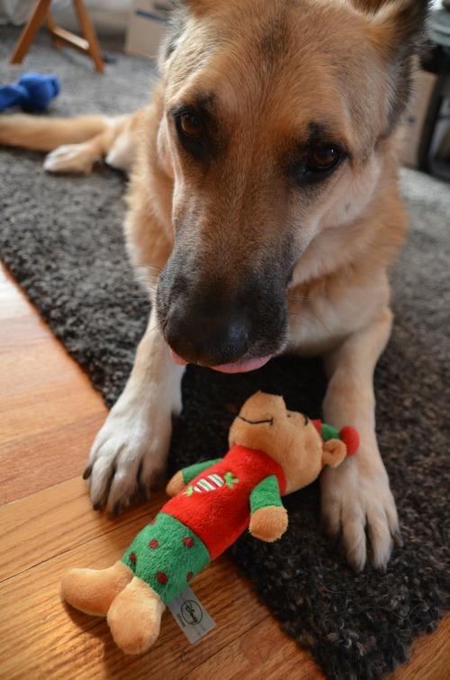 Winnie Pooh Dog Toy