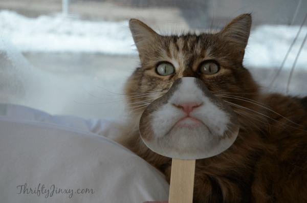 Lucky Grumpy Cat