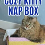 cozy kitty nap box
