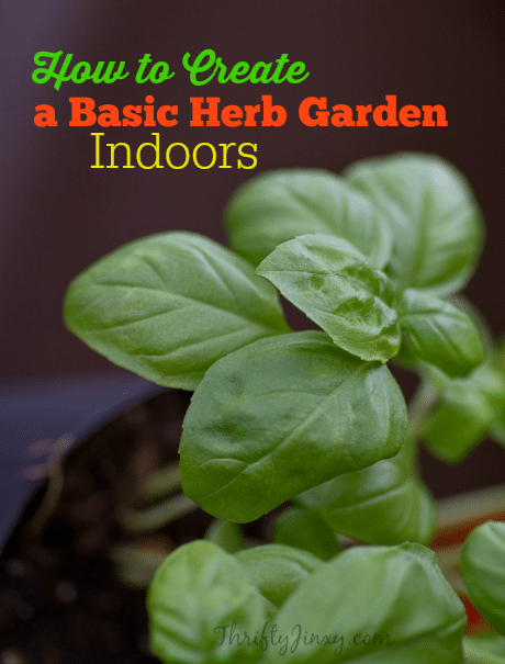 How to Create a Basic Herb Garden Indoors