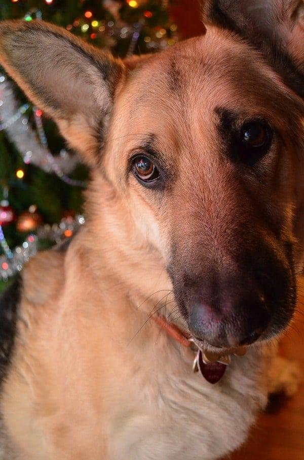 Toby Christmas Tree