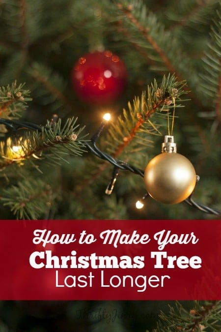 How to Make Your Christmas Tree Last Longer: Fresh cut trees usually last 4-6 weeks when it is well taken care of properly. Want to know how to make your Christmas tree last longer? Here are a few helpful tips.