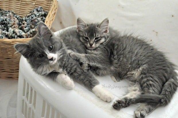 Adopting Kitten Pairs