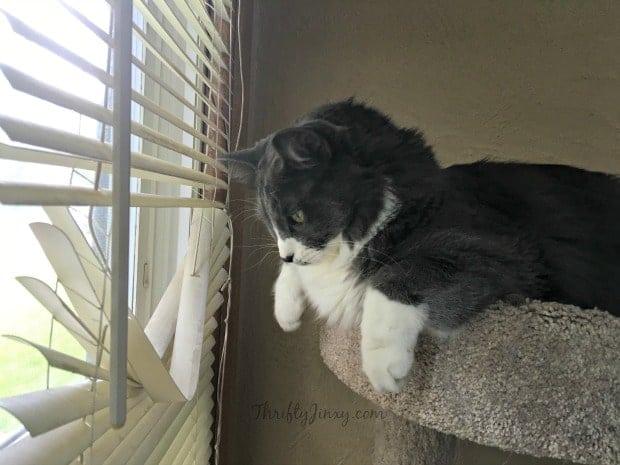 Cat Window Blinds Sammy