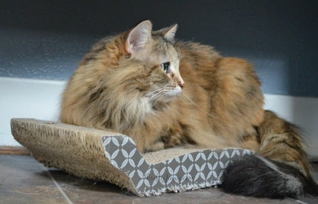 Lucky Cat Sitting