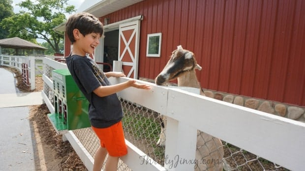 sibley-farm-mankato-petting-zoo