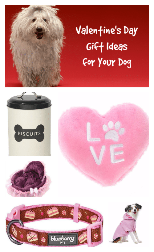 Valentine's Day Gift Ideas for Your Dog