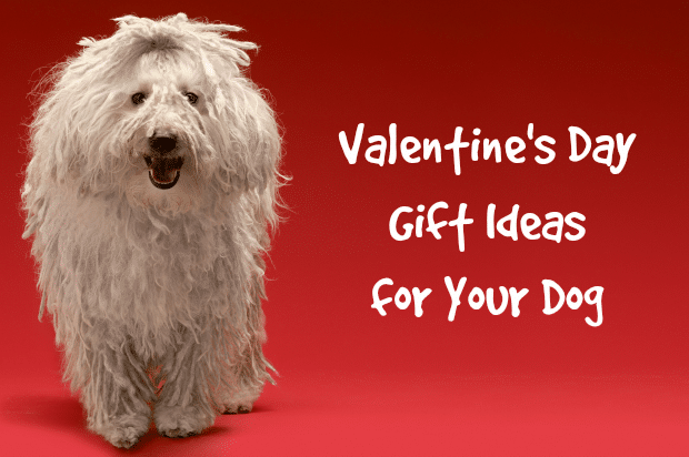 Valentine Dog Gifts