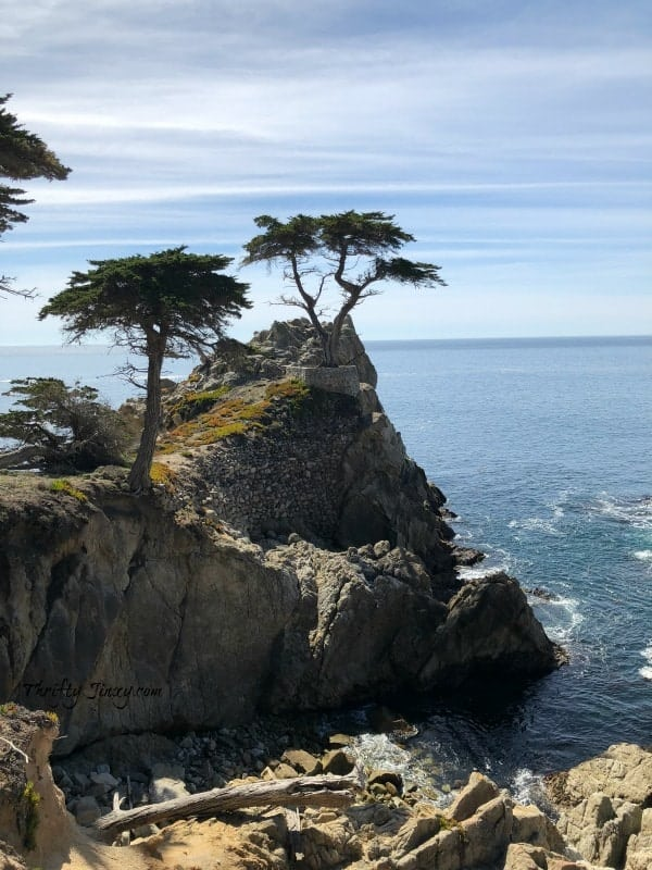 The Lone Cypress 17-Mile Drive