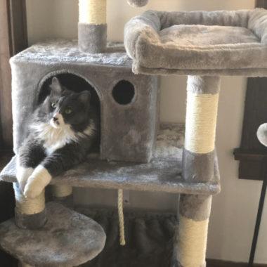 Cat Tree Hideaway