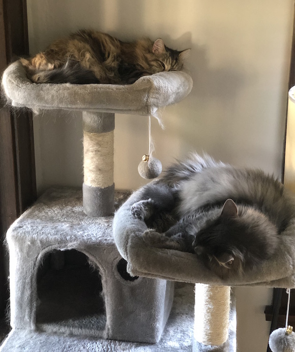 Multiple Cats Tree