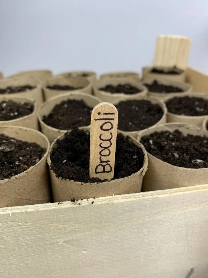 Paper Roll Seed Starter Craft