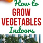 Grow Vegetables Indoor