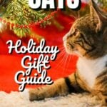 Cats Holiday Gift Guide