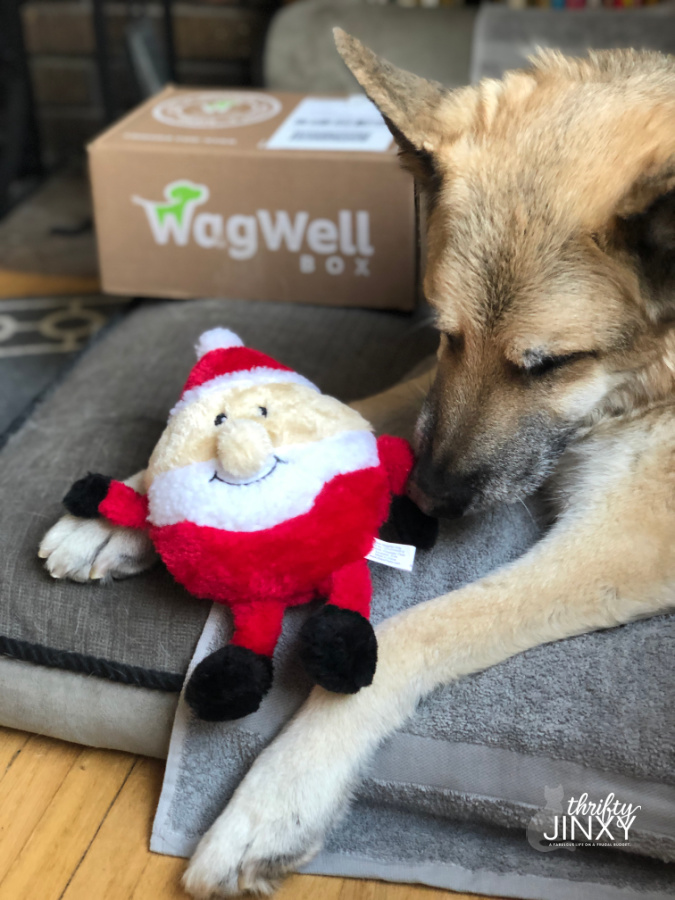 WagWell Dog Subscription Box