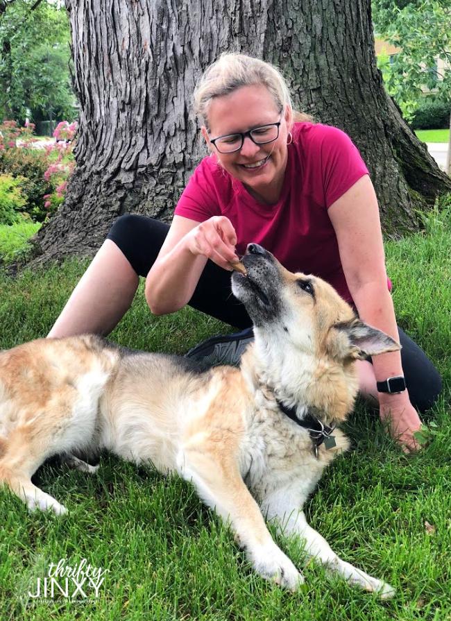 Woman feeding homemade dog biscuit to German Shepherd Dog