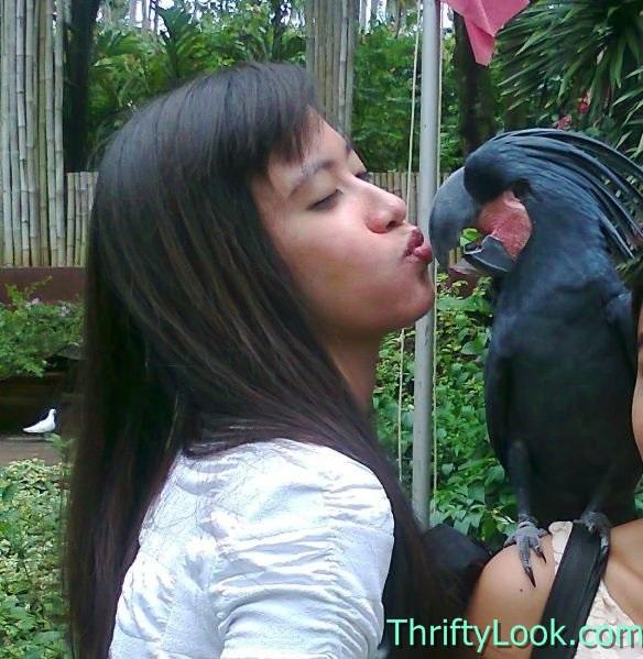 kiss bird, kissing bird, bird kissing