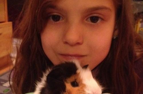 guinea_pigs