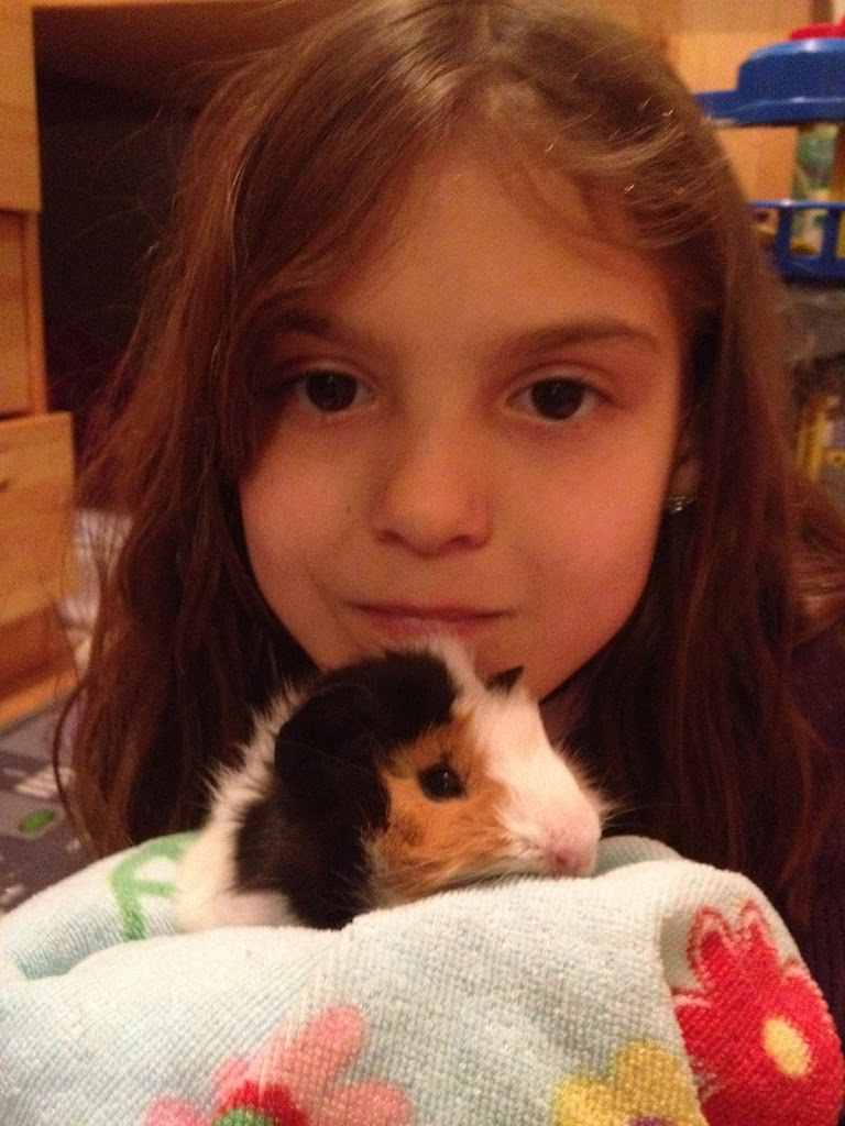 guinea_pigs_small_guinea_pig_with_young_girl