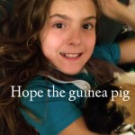 Farewell Hope The Guinea Pig – Losing a Pet