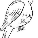 Bird Colouring Pages Printable