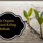 6 Organic Weed Control Methods to Make Your Life Easier