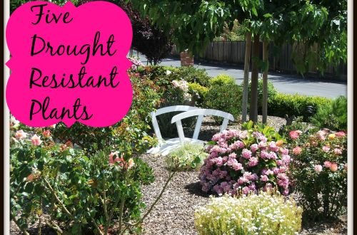 Drought Resistant Plants