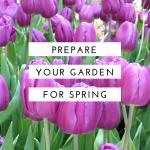 Spring Garden Prep – Get Ready for the Growing Season
