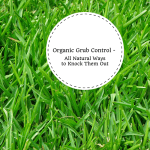 Organic Grub Control – All Natural Ways to Knock Them Out