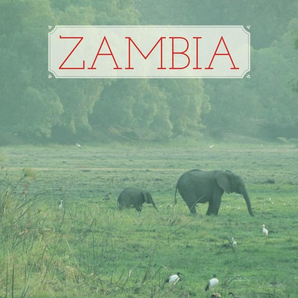 zambia_elephants_baby