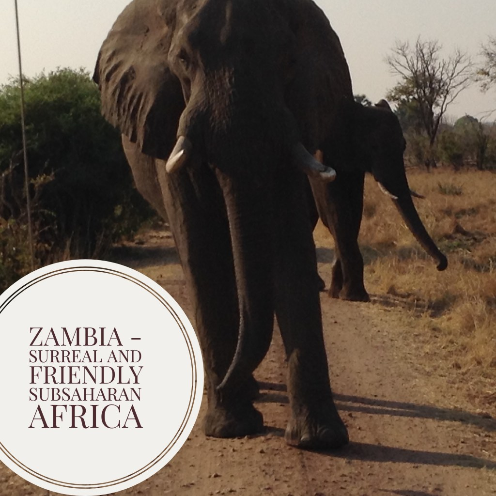 zambia_elephants