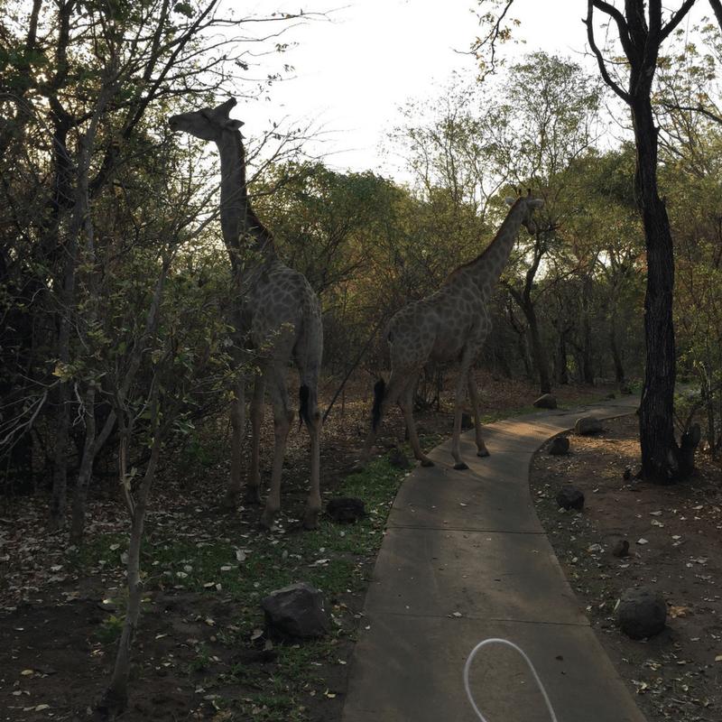 avani_pathway