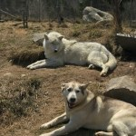 One of a Kind Saguenay Family Resort with Wolves