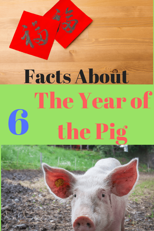 year_of_the_pig