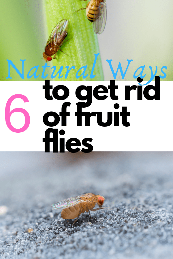 fruit_flies_on_green_plant