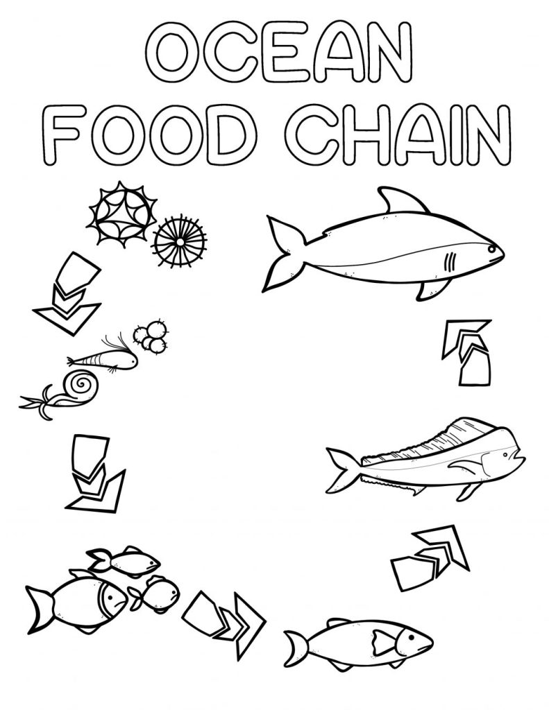 Ocean Food Chain Colouring Book   Thrifty Mommas Tips