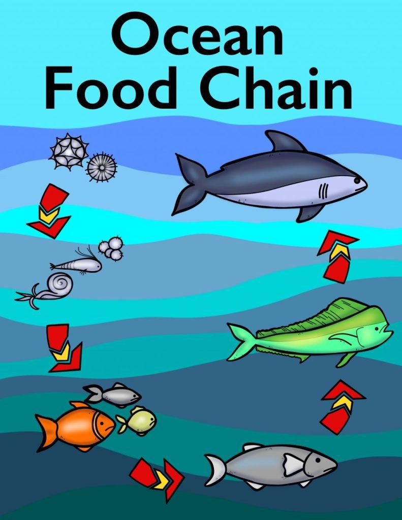Food Chain Pyramid   Worksheet   Education.com   1024x791