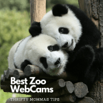 Best Zoo Webcams to Watch Right Now