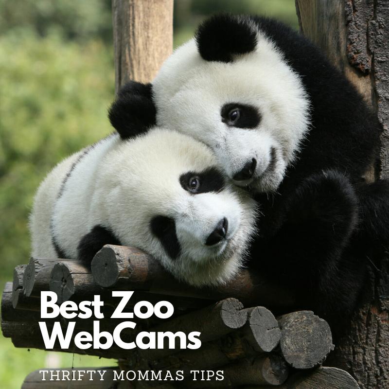 zoo_webcams_pandas