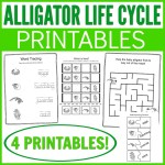 Alligator Life Cycle Learning Kit Printables