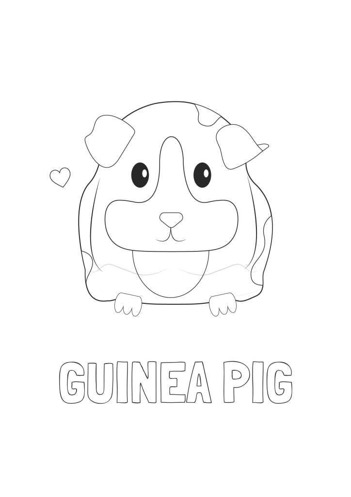 guinea_pig_colouring_page