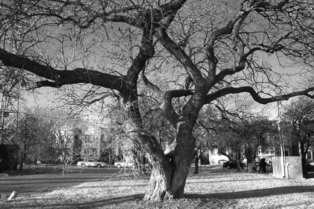 tree001web