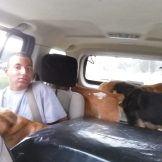 taking dogs to kennel (2)