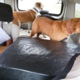taking dogs to kennel (4)