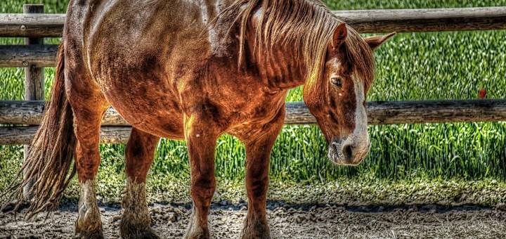 throw case horse animal farm