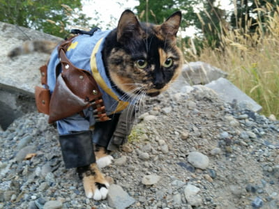 Fallout cat cosplay 2