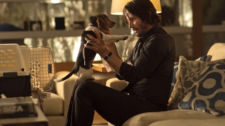 John Wick puppy