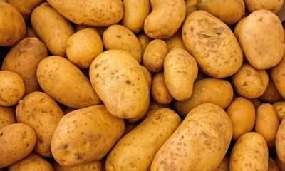 soedesco sent us a potato